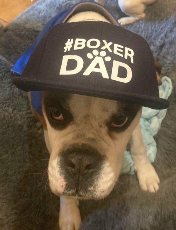 Boxer Dad cap
